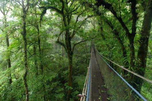 Costa Rica Monteverde National Park